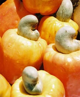 Cashew fruit - caju