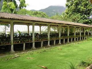 Rio de Janeiro Attrations: The Jardim Botânico orchidary