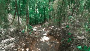 Easy hike in rio de janeiro
